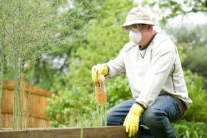 hombre fertilizando plantas
