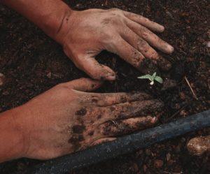 hombre tocando tierra con planta